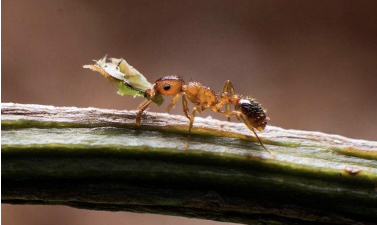如何处理家中蚂蚁
